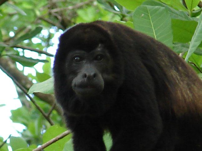 Paquete Congo